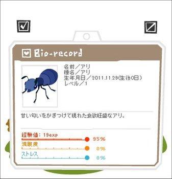 111129アリ2.jpg